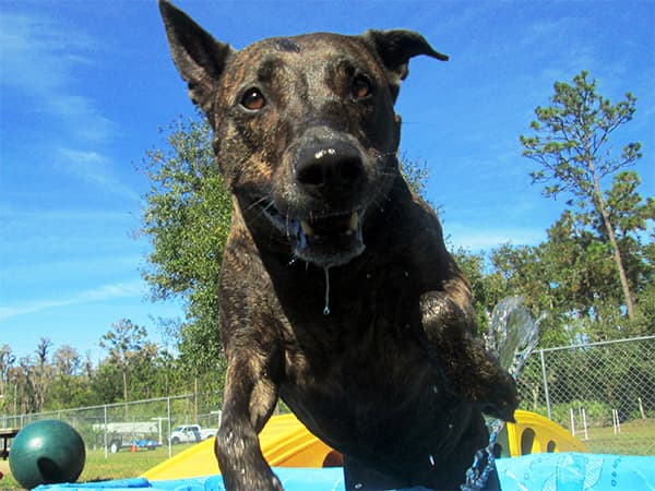 Dog jumping out of a wading pool
