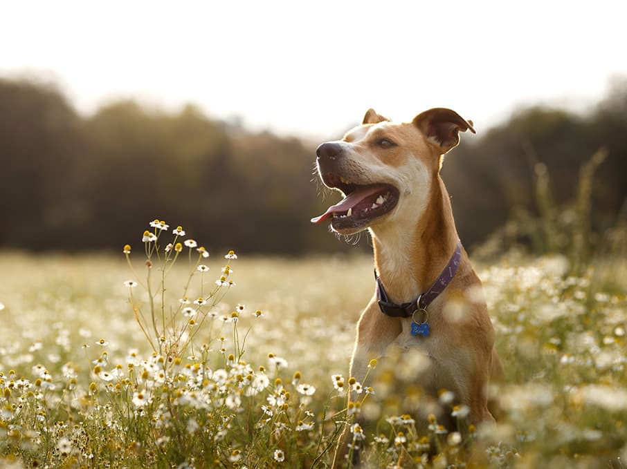 Dog standing in a meadow